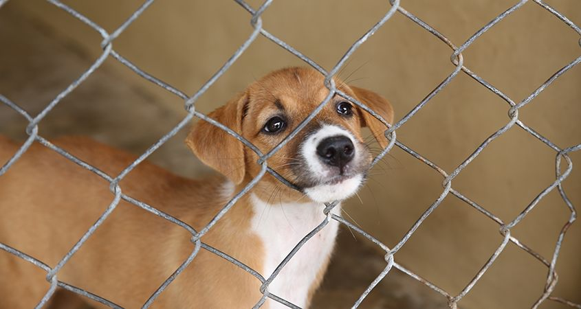 Adopting Dog from a shelter